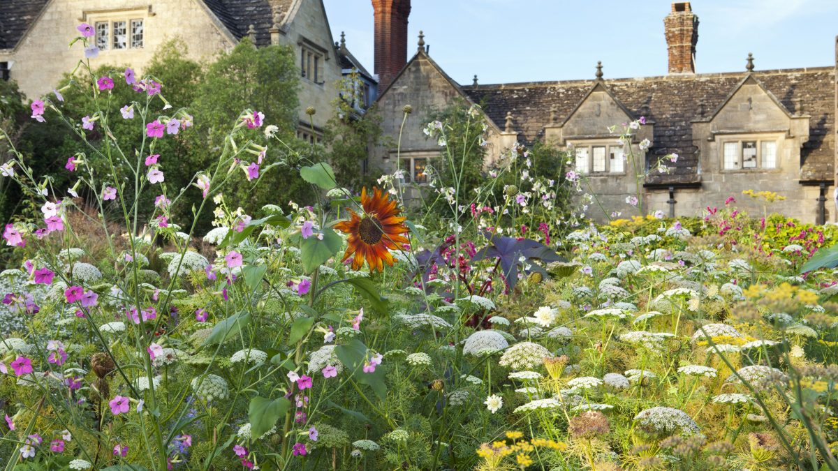 gravetye-manor-wildflowers-1200x675